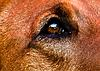 members/perro-albums-sommer-2013-picture40716-augenblick1-new.jpg